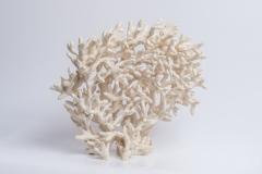 Koralle 1, Ton